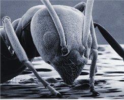 La hormiga del bugzilla