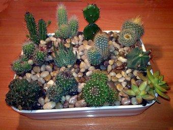 Jardinera De Cactus Introblog